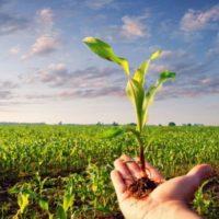 Lo scandalo del bio: copre il 15% dei terreni ma prende solo il 3% degli aiuti