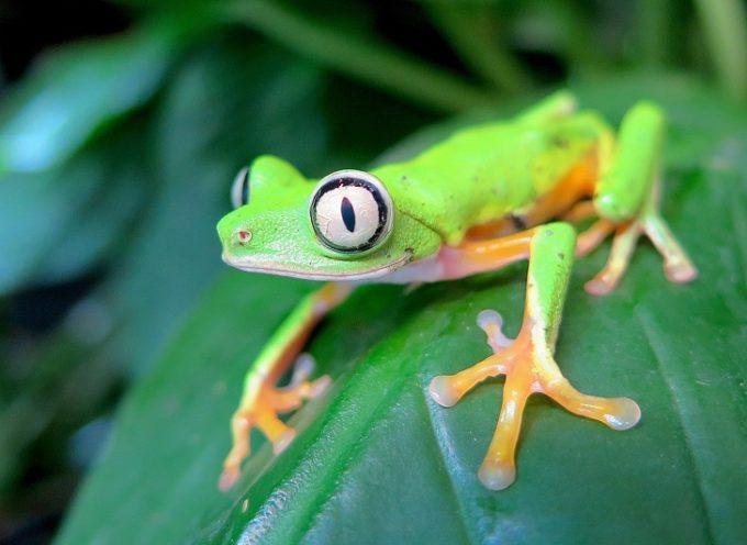 20 animali così rari che saresti fortunato a trovarne uno