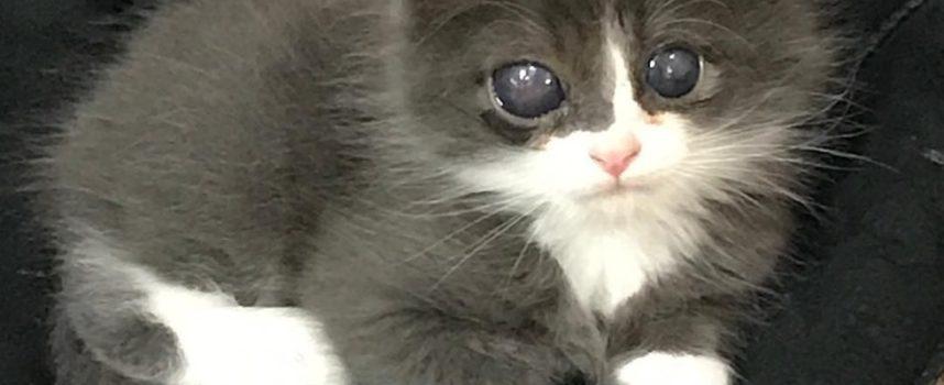 La donna ha dato a un gattino speciale una casa quando nessuno lo ha fatto e ha cambiato la sua vita