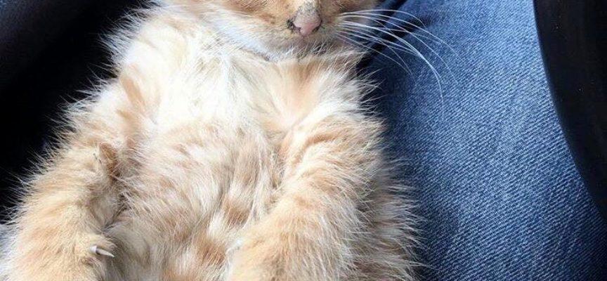 Il gattino sibilante ottiene la sua prima coccola dal soccorritore e si rende conto che non può resistere all'amore