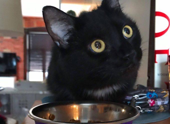 Il gatto torna a casa tutti i giorni fino a quando non trova un posto sicuro per i suoi cuccioli