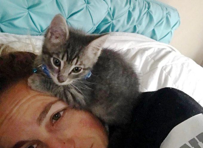 Il postino salva il gattino randagio e gli dà una casa, il gattino non può smettere di coccolarlo