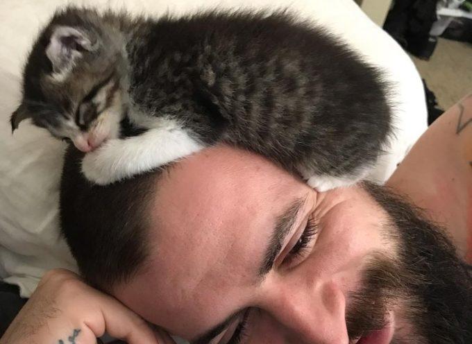 I gattini randagi trovano qualcuno da amare dopo che sono stati salvati dallo scarico della fogna