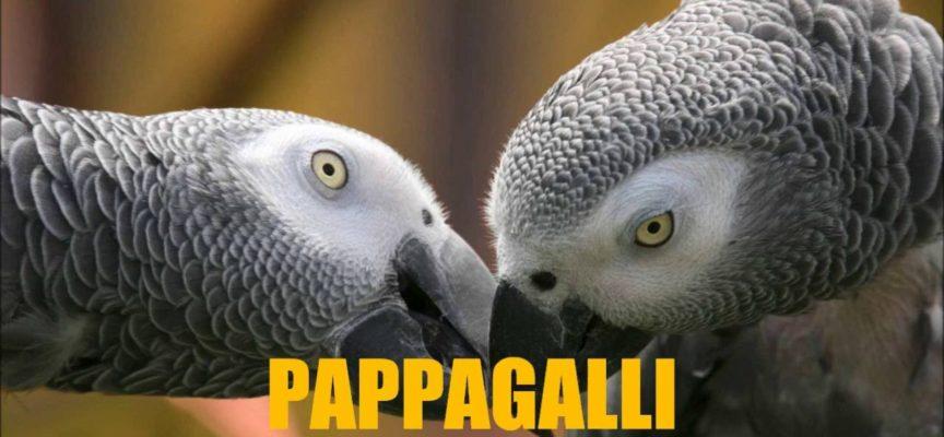 10 ANIMALI PIU' BELLI AL MONDO