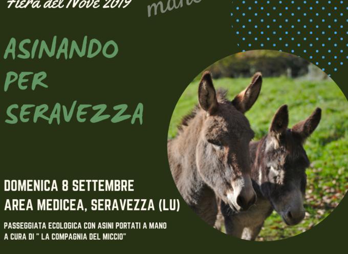 ASINANDO A SERAVEZZA, Domenica 8 Settembre