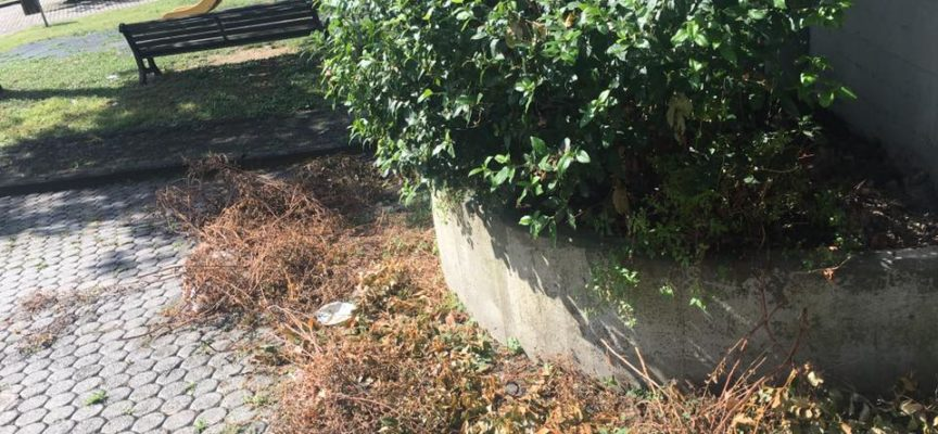 PORCARI – Ci hanno segnalato sfalci e rami abbandonati nel giardino pubblico davanti alla piazzetta in via della stazione
