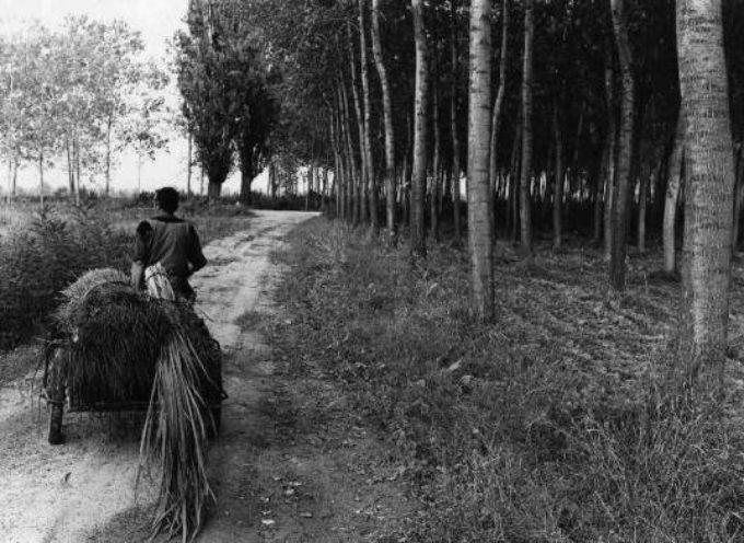 La raccolta delle canne e delle erbe palustri…