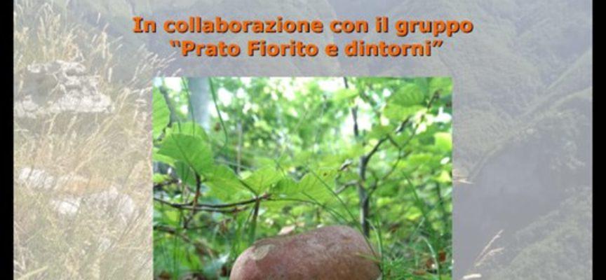 """Interessante Mostra Micologica in collaborazione con il gruppo """"Prato Fiorito e dintorni"""""""