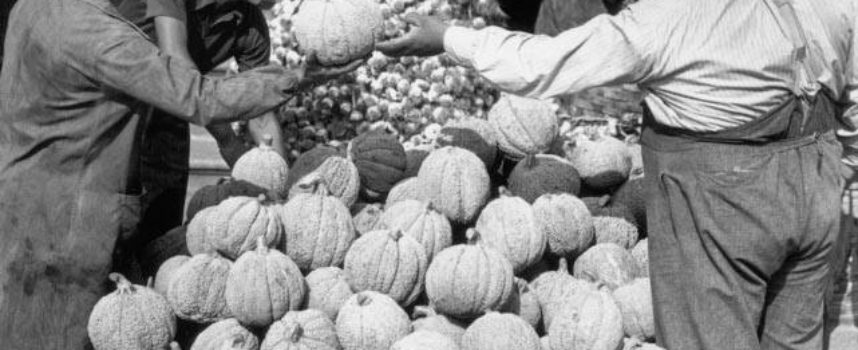I prodotti dell'autunno…