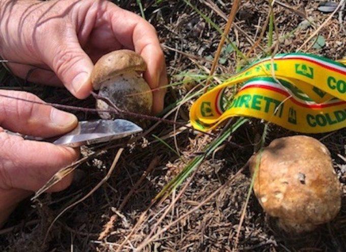 Garfagnana: è boom funghi (+50%), è manna per agriturismi e ristorazione tipica