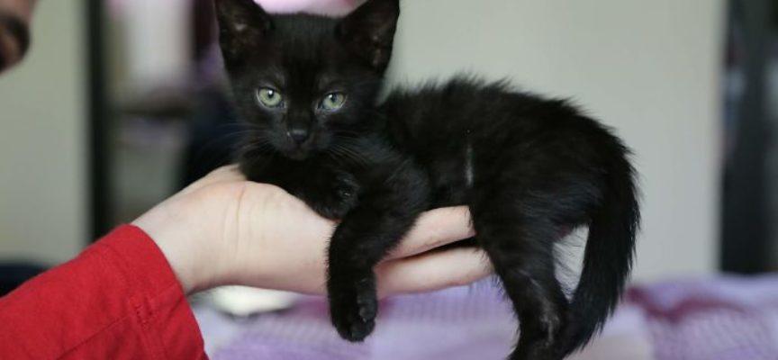 Dopo aver superato la malattia, Kitty ha la vita davanti, è la metà delle dimensioni di un gatto ordinario