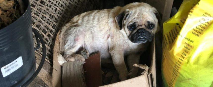 Più di 40 cani vengono salvati dal canile clandestino di Curitiba