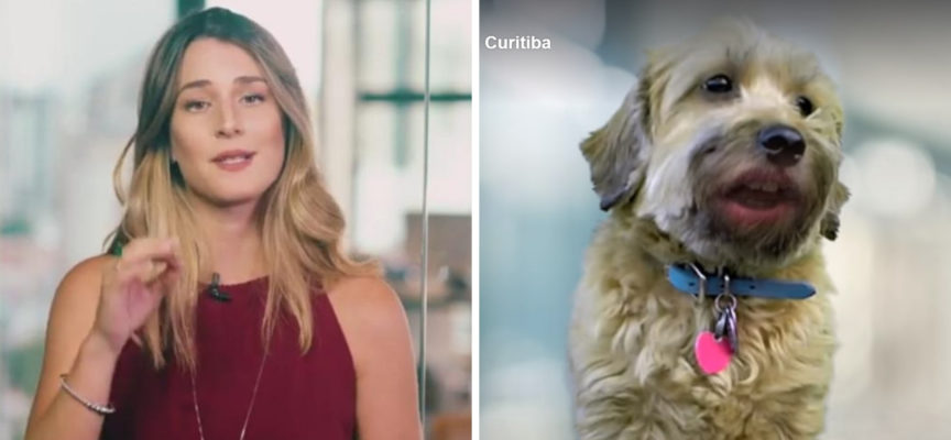 """Il municipio di Curitiba prende il """"meme Betina"""" per promuovere l'adozione degli animali"""