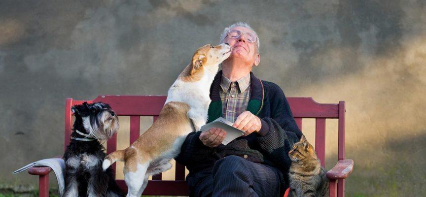 Cani e gatti aiutano a superare la perdita del partner