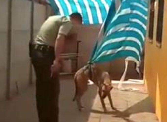 """Il più dolce """"grazie"""" di un cane al poliziotto che l'ha salvato"""