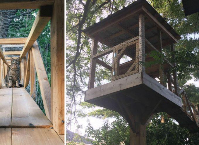 Papà gatto costruisce una casa sull'albero in modo che i suoi gatti possano giocare fuori