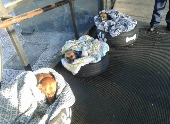 L'azienda fornisce coperte per cuccioli