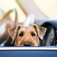 La compagnia porta i cani in attesa di adozione