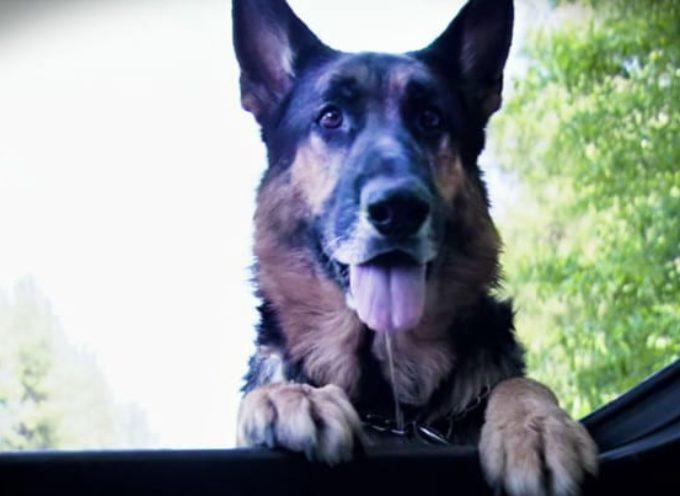 Il cane randagio eroico salva la donna morente dall'incidente stradale