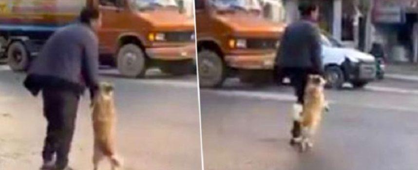 Il cane è stato avvistato prendendo la mano del proprietario per attraversare la strada