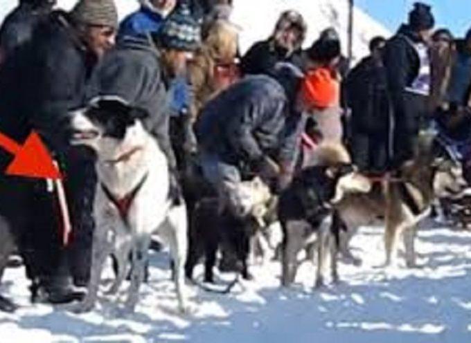 """Il cane di salvataggio eccitato fa ridere tutti """"parlando"""" all'inizio della gara"""