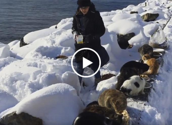 Il buon samaritano nutre un gran numero di gatti selvatici