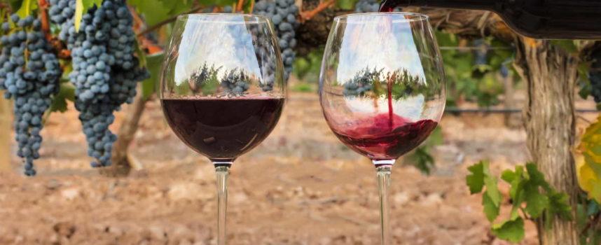Zero solfiti, nessun additivo e alta digeribilità, i vini naturali conquistano il mercato e i consumatori più esigenti