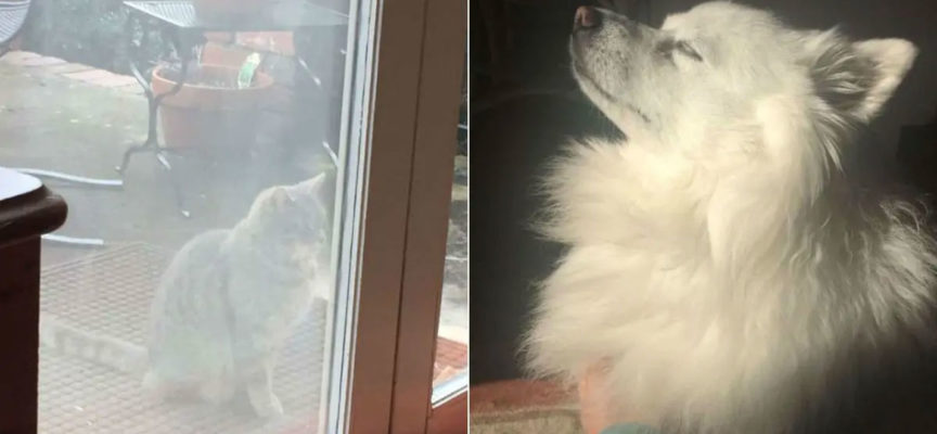 Il gatto dal cuore spezzato visita la casa del vicino ogni giorno in cerca del suo amico cane che è morto