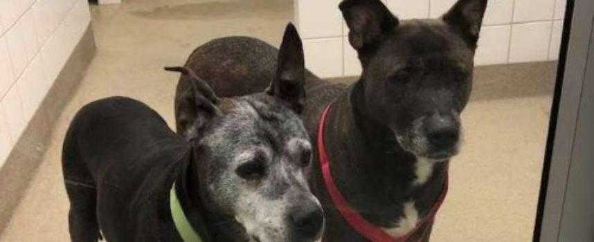 Trovano due cani anziani soli e afflitti nel bagno di un negozio