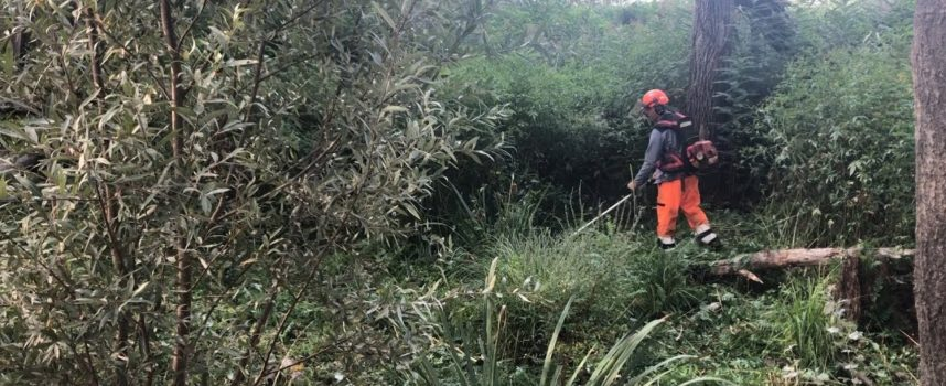 Lotta alle specie invasive nell'oasi del Sibolla