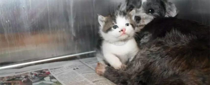 Un cane ha salvato un gattino da un burrone, lo ha nutrito con tutto l'amore come se fosse il suo