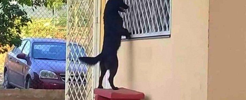 Cucciolo fedele ha camminato per chilometri fino alla scuola del suo proprietario per vederlo studiare dalla finestra