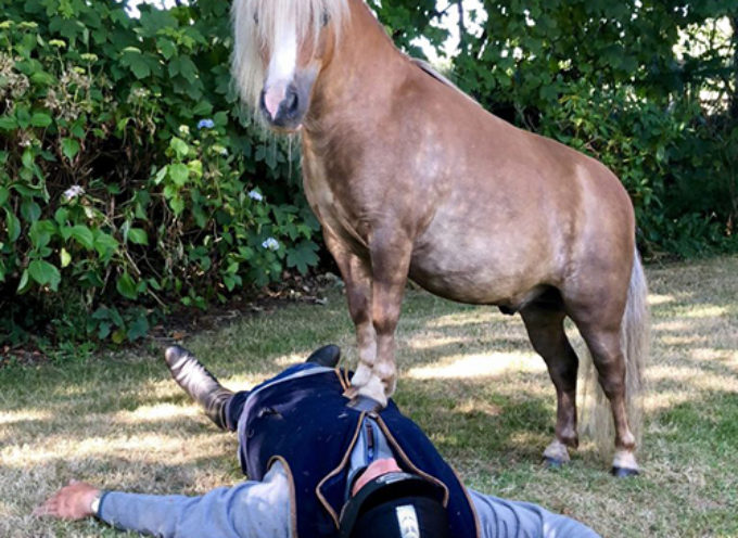 Un eroe pony salva la vita al fidanzato del proprietario applicando la rianimazione cardiopolmonare