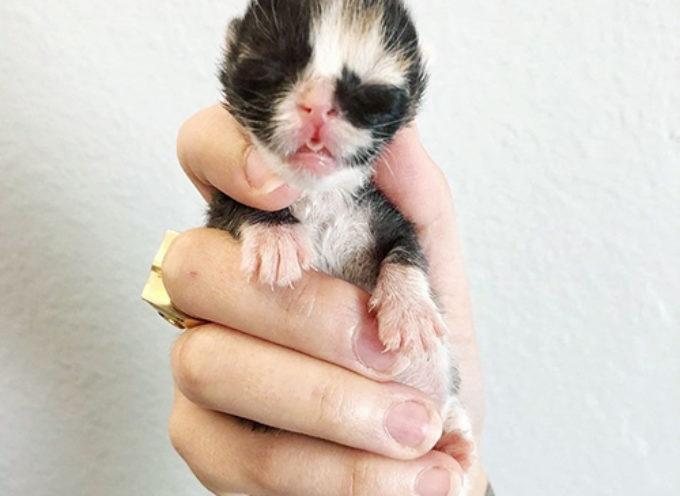 Rosita, la gattina orfana che sorrise di nuovo dopo essere stata salvata dal destino peggiore