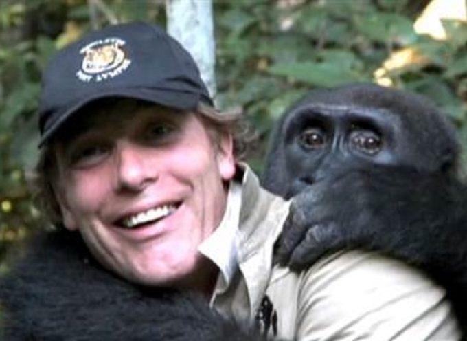 L'uomo si riunisce con un gorilla che ha allevato come suo figlio e rilasciato in libertà