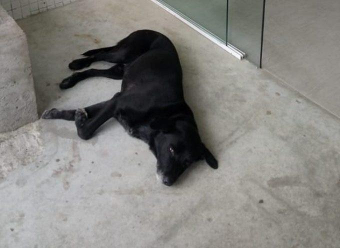 """Cane """"campera"""" nell'ospedale SP in attesa del proprietario"""