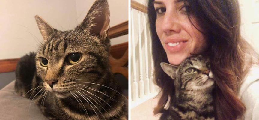 La donna trova il suo gatto scomparso 13 anni fa nella storia incredibile