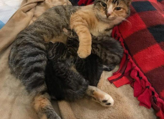 Mamma Gatta mantiene i suoi cuccioli al sicuro nel mucchio di legno fino all'arrivo del salvataggio
