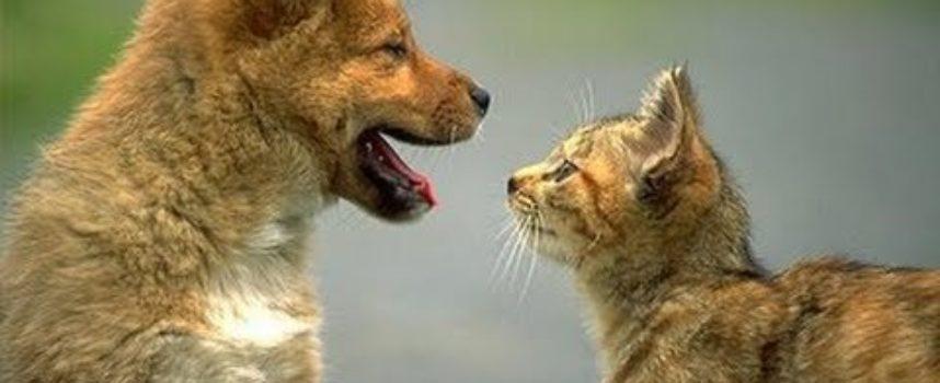 I nostri amici animali. Cani, Gatti e.. [video divertenti]
