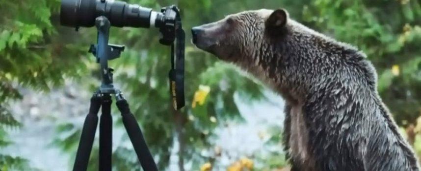 Il nuovo fotografo naturalista canadese catturato dalla fotocamera (Video)