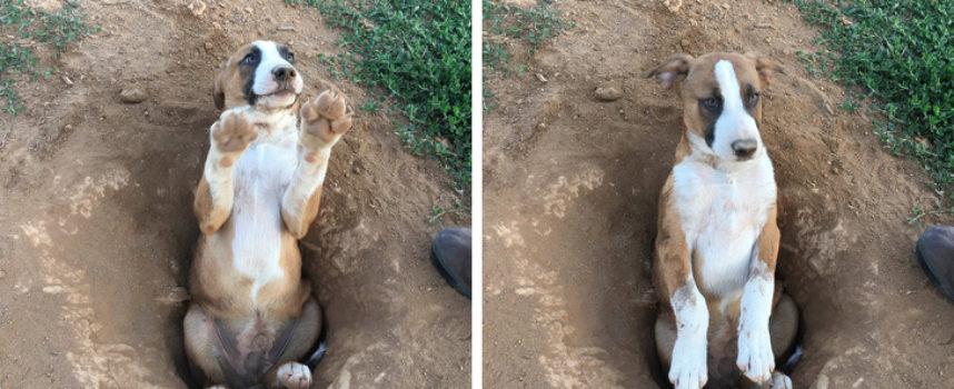 15 cani che ti conquisteranno con i loro scherzi