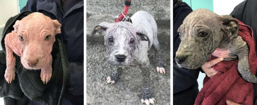 Un uomo entra misteriosamente in un veterinario e lascia 3 cuccioli molto malati