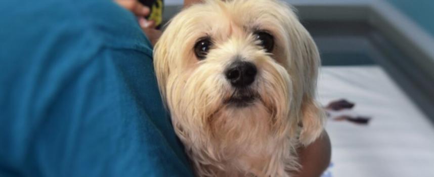 Microchip cane è obbligatorio? A cosa serve, quanto costa e sanzioni previste