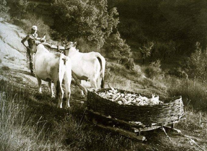 Gli antichi mezzi di trasporto: la treggia.