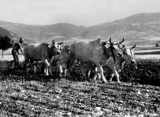 L'aratura volge al termine, ormai i campi devono essere pronti per la semina del frumento,