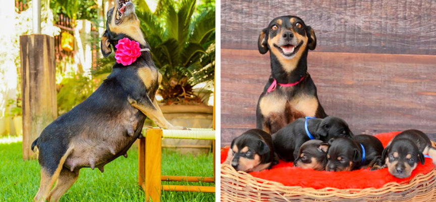 20 animali che sono papà o mamma e trasudano orgoglio dai loro cuccioli!