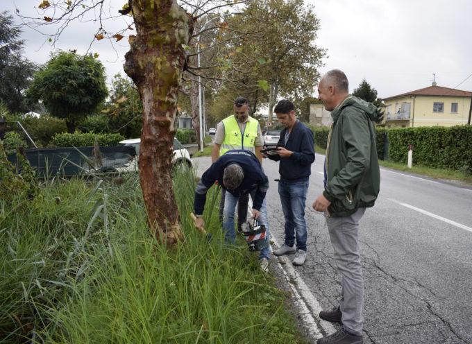 Saranno abbattuti sei alberi morti sulla via Sarzanese