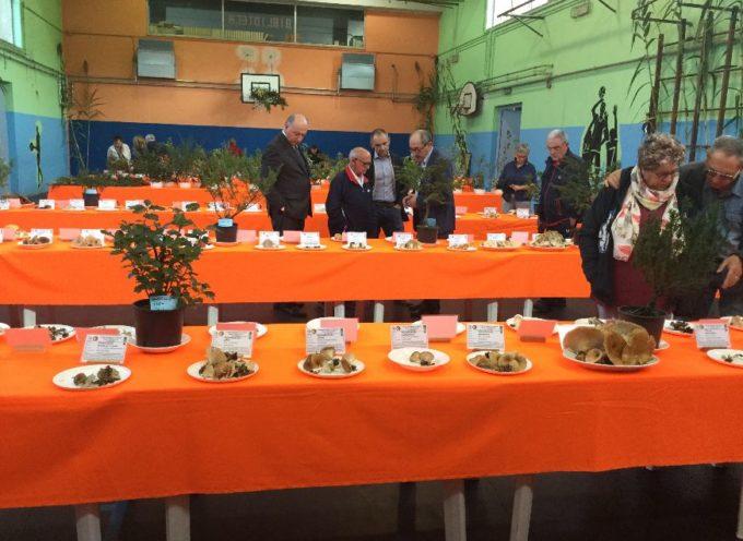 Grande soddisfazione deI Gruppo Micologico Danesi per la riuscitissima mostra di funghi e piante botaniche