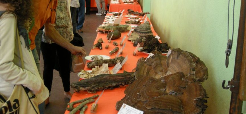 da domenica 13 ottobre tante iniziative con il gruppo micologico Danesi di Ponte a Moriano