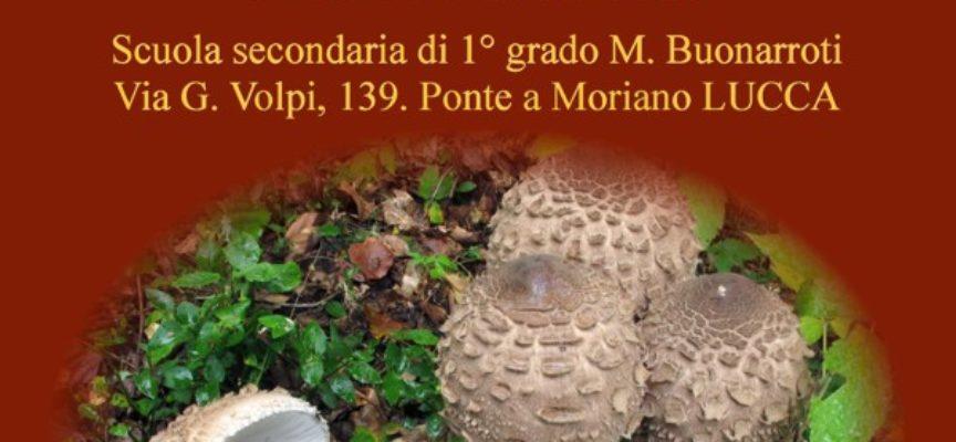 escursione, mostra e gita con il gruppo micologico Danesi di Ponte a Moriano